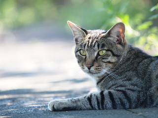 木陰で涼む猫