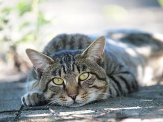 木陰で休む猫