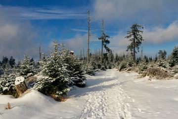 Winter auf dem Kaiserweg im Oberharz