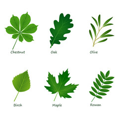 set of vector green leaves on white background