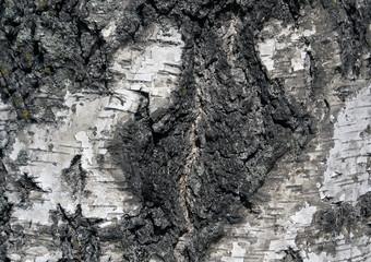 Tree bark texture.