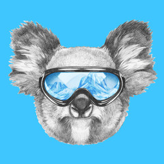 Portrait of Koala with ski goggles. Hand drawn illustration.