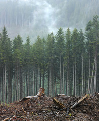Felling of trees. Ecological problem on the example of deforestation in the Carpathians.