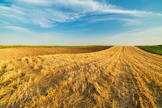 Wheat stubble field rural landscape