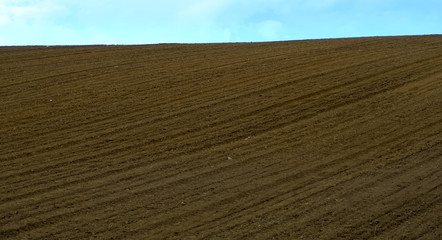 freshly plowed field in summer, in the background the sky