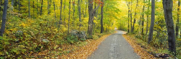 Autumn, Macedonia Brook State Park, Connecticut