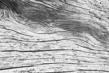 Driftwood Abstract Pattern Wall mural