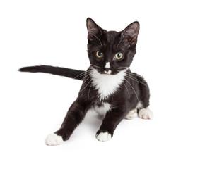 Alert Black and White Kitten Looking Forward