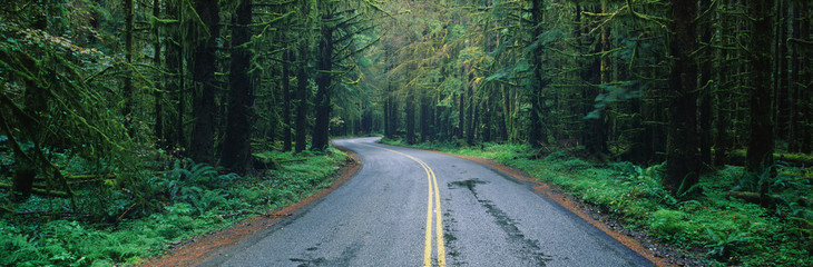 This is located in the Hoh Rain Forest. It shows a rain soaked road in bad weather surrounded by...