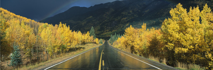 Wall Mural - This is the Million Dollar Highway in the rain. The road is dark and wet. There are aspen trees with gold leaves on either side of the road.