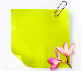 Note paper green