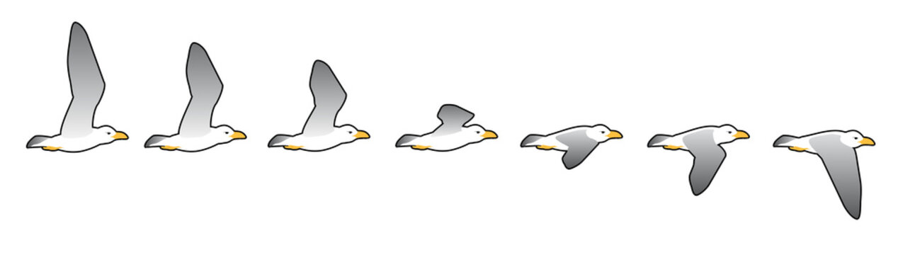 Seagull, illustration for animation, frames, vector