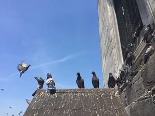 Eminönü Güvercinleri