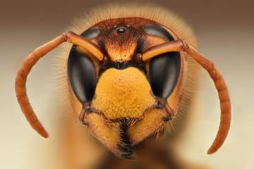 Extreme sharp closeup of wasp head