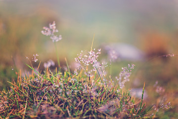roua pe fire de iarba la munte