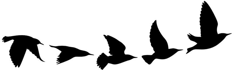 kostenlos vögeln