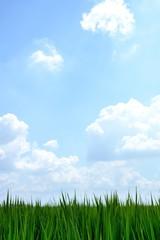 緑の葉 青空背景
