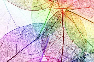 Foto op Canvas Decoratief nervenblad Multicolor decorative skeleton leaves
