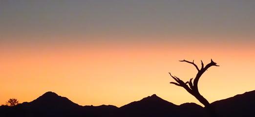 Silhuette eines Baumes vor Sonnenuntergang