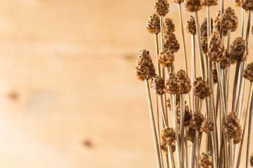 dry grass flower on wood background