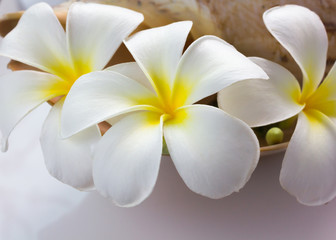beautiful charming aroma white flower plumeria made  more classic with vintage and boutique look for spa decoration