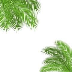 palm branch frame