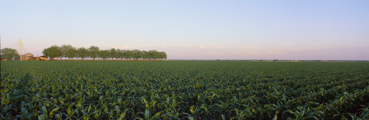 Panoramic view of crop field