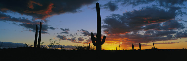 Dramatic Arizona desert sunset