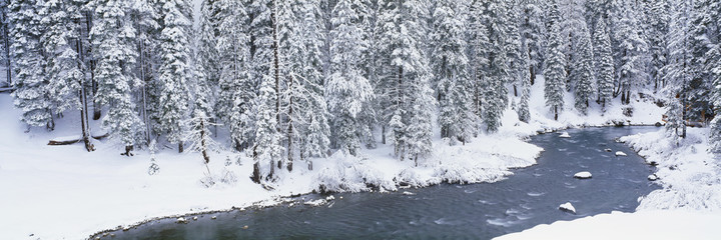 Stream in winter, California