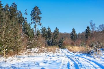 Spaziergang in den Winter