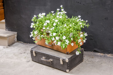 Two vintage old retro suitcase lay on the street and are worth a vase of white flowers