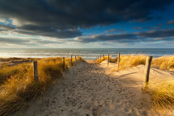 sand path to North sea beach in sunlight
