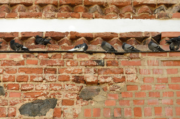 Old brick wall with pigeons