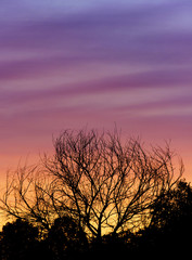 Skyscape Tree Silhouette