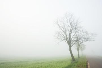 Fog above a field
