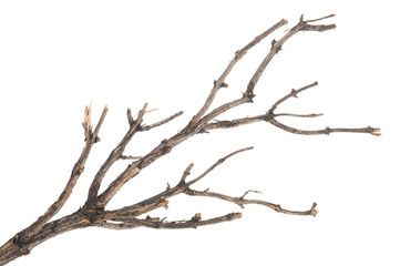 Dry tree branch Wall mural