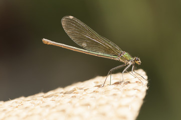 A dragonfly just landed on a straw hat