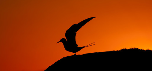 tern's silhouette against sunset colors
