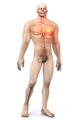 Heart Attack in a male Body