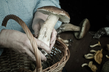 hands of an elderly woman holding a white mushroom