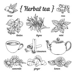 Herbal tea collection in sketchy style: teapot and cup, herbs, flowers and plants