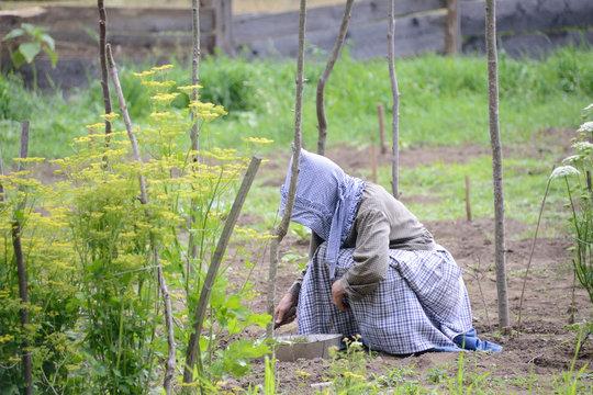 19th Century Gardener