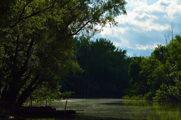 Riverside at summer light and the edge of forest