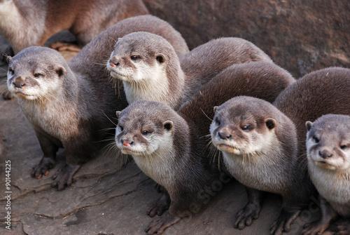 Fototapete Otter