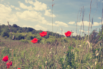 Vintage photo of summer landscape, wild meadow and poppy flowers