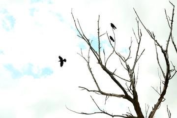 Birds on dry tree on blue sky background