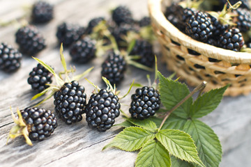 blackberry still life of ripe berry on natural wood background