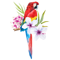 Watercolor parrot