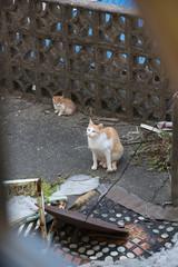 Cats of Jeju Island in Korea 韓国済州島の猫