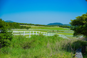 The Nature of Jeju Island in Korea 韓国済州島の自然